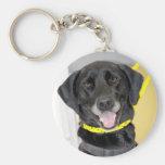 Labrador negro/llavero alemán del indicador de pel
