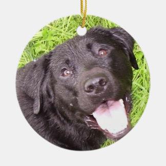 Labrador negro ornamentos de reyes magos