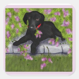 Labrador negro, pegatina cuadrada