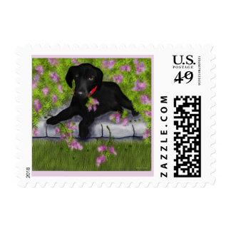 Labrador negro, sello