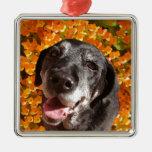 Labrador negro viejo ornamento para arbol de navidad