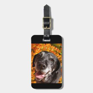 Labrador negro viejo etiqueta de maleta