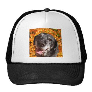 Labrador negro viejo gorras