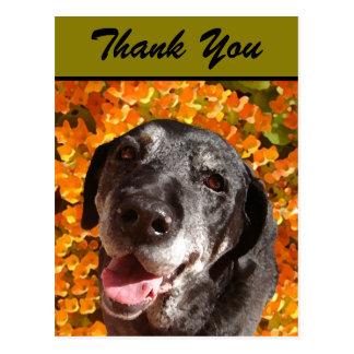 Labrador negro viejo tarjeta postal