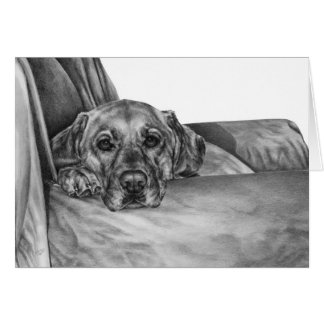Labrador on Chair Drawing by Kelli Swan Greeting Cards