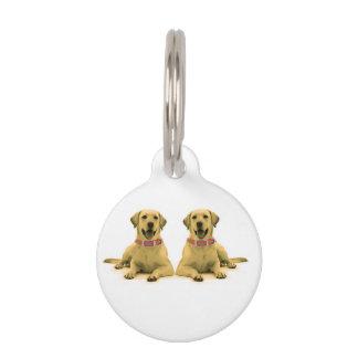 Labrador persigue la imagen para la pequeña placa de mascota
