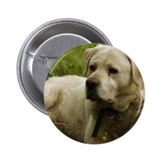 Labrador Photo Pin
