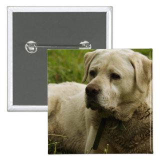 Labrador Photo Pins