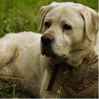 Labrador Photo Cutout