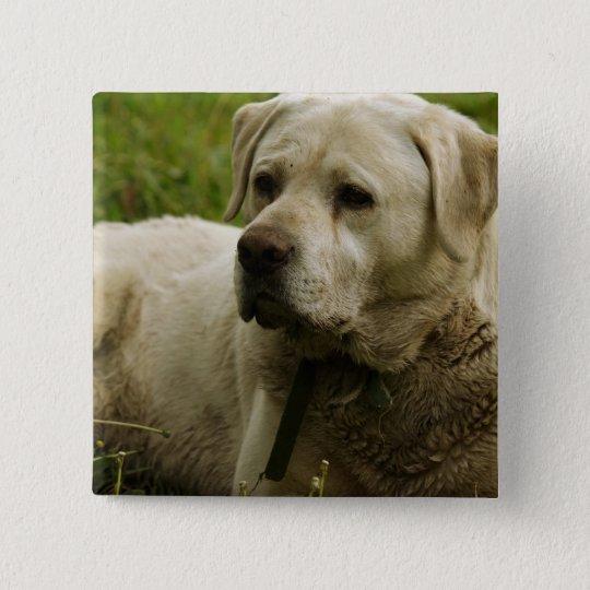 Labrador Photo Pinback Button