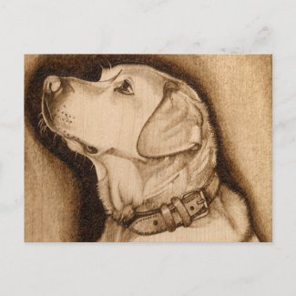 Labrador postcard