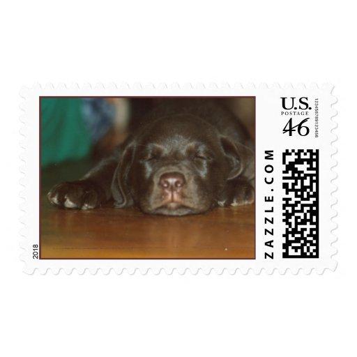 Labrador pup postage