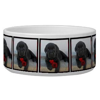 Labrador puppy dog bowl