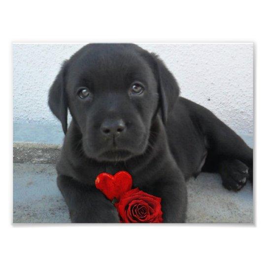 Labrador puppy dog photo print