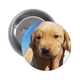 Labrador Puppy - Good Morning! Pinback Buttons