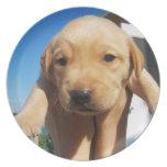 Labrador Puppy - Good Morning! Party Plates
