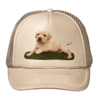Labrador puppy hat