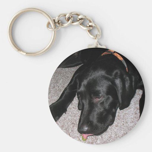 Labrador Puppy Is Eating Grapes Keychain