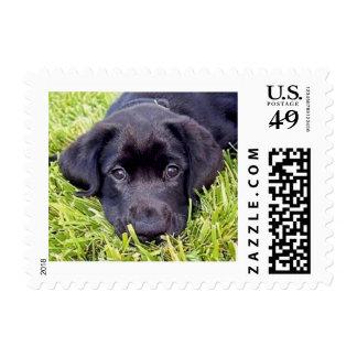 Labrador Puppy on Grass Portrait Postage