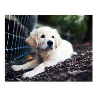 Labrador Puppy Playing In The Garden Postcard