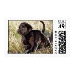 Labrador Puppy Postage
