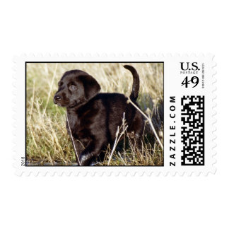 Labrador Puppy Postage Stamp