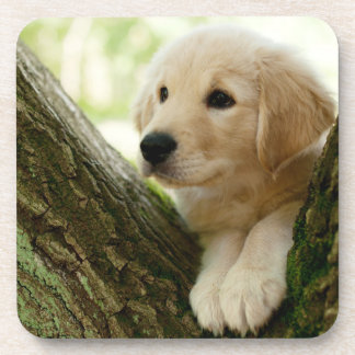 Labrador Puppy Sitting In A Woodland Setting Beverage Coaster