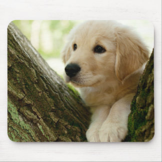 Labrador Puppy Sitting In A Woodland Setting Mouse Pad