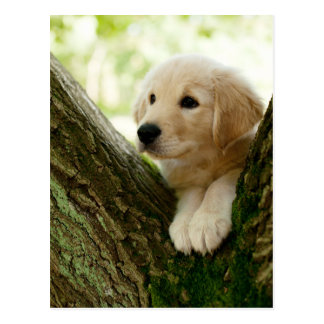 Labrador Puppy Sitting In A Woodland Setting Postcard
