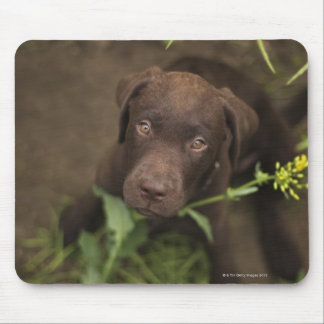 Labrador puppy sitting in grass mouse pad