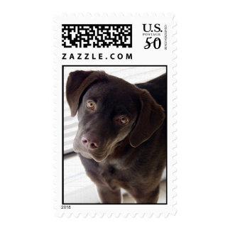 Labrador Puppy Stamp