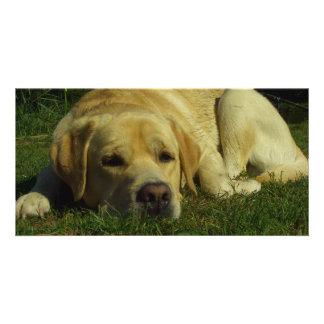 Labrador que se enfría en la hierba verde tarjeta fotográfica