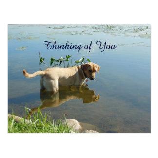 Labrador Reflection Thinking of You Postcard