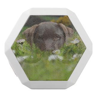 labrador-retriever-12 white boombot rex bluetooth speaker
