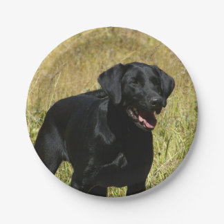 labrador-retriever-25.jpg paper plate