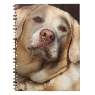 Labrador retriever 2 libros de apuntes