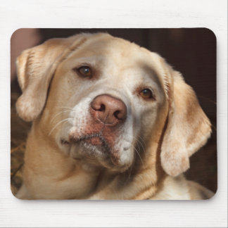 Labrador Retriever 2 Mouse Pad