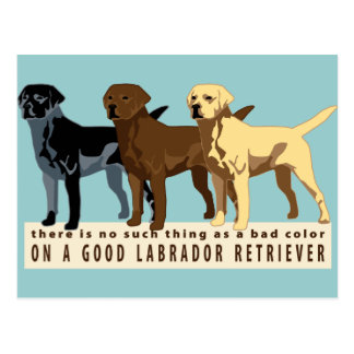 Labrador Retriever 3 colors Postcard