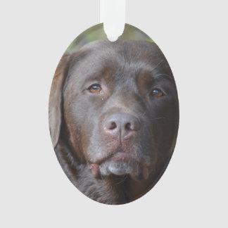 Labrador retriever adorable del chocolate
