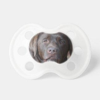 Labrador retriever adorable del chocolate chupetes