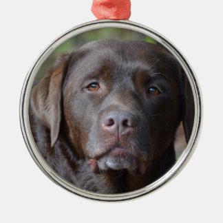 Labrador retriever adorable del chocolate adorno redondo plateado