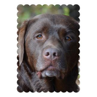 Labrador retriever adorable del chocolate invitación 12,7 x 17,8 cm