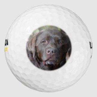 Labrador retriever adorable del chocolate pack de pelotas de golf
