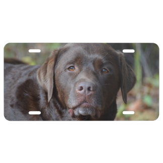 Labrador retriever adorable del chocolate placa de matrícula