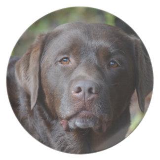 Labrador retriever adorable del chocolate platos para fiestas