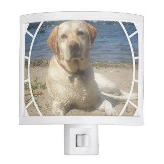 Labrador retriever amarillo