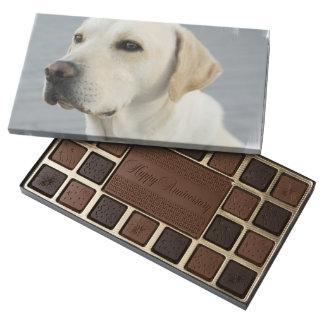 Labrador retriever amarillo caja de bombones variados con 45 piezas
