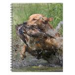 Labrador retriever amarillo con el pato cuaderno