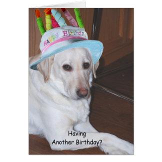 Labrador retriever amarillo en gorra del cumpleaño tarjetas