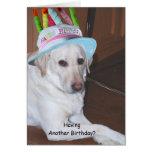 Labrador retriever amarillo en gorra del tarjetas